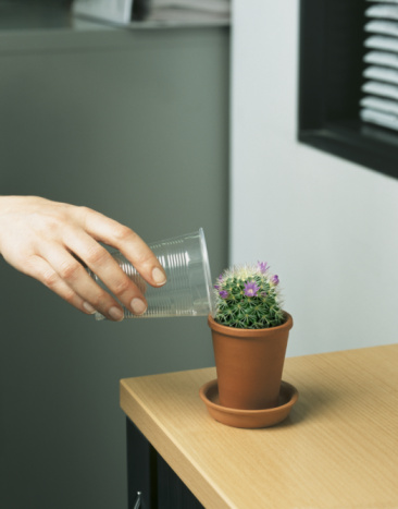 Woman watering cactus in office, close-up