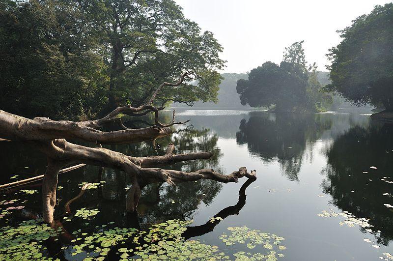800px-Acharya_Jagadish_Chandra_Bose_Indian_Botanic_Garden_-_Howrah_2011-01-08_9732