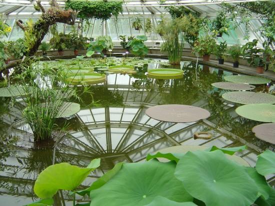 Botanical_Garden_Berlin_-_Victoria_House_(flo)