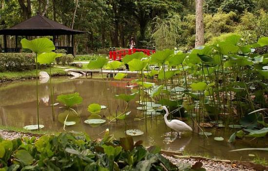 Jardim-Botânico-1