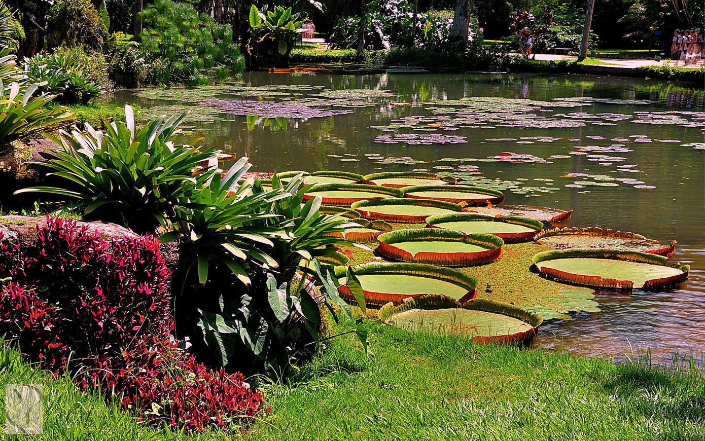 Jardim-Botânico-2