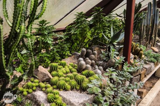 Jardim-Botânico-4