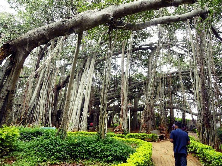 indian garden