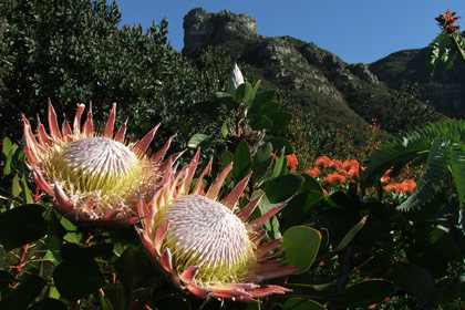 kirstenbosch-national2