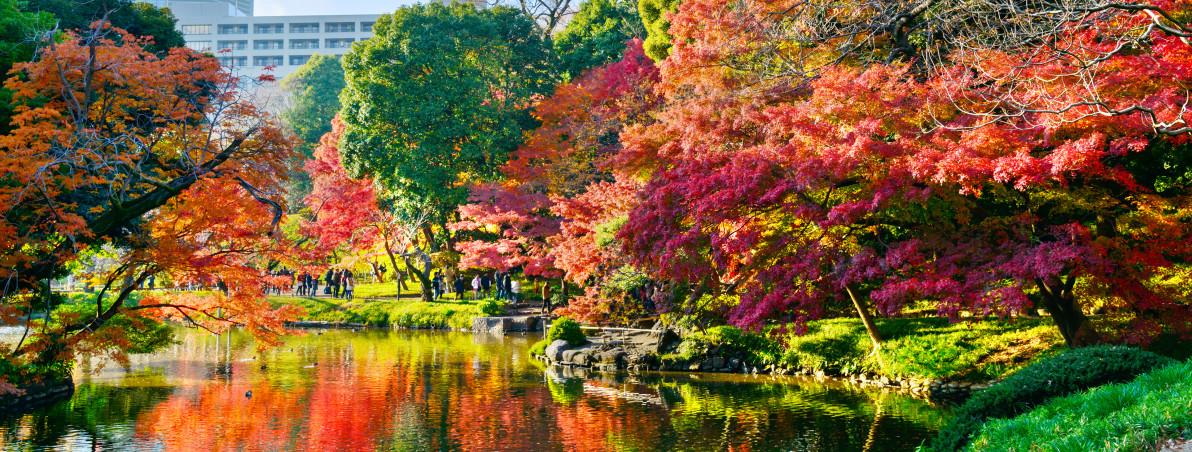 Koishikawa Korakuen Garden in Tokyo, Japan