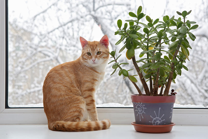 cat-cat_guide-a_ginger_cat_sitting_next_to_an_indoor_plant